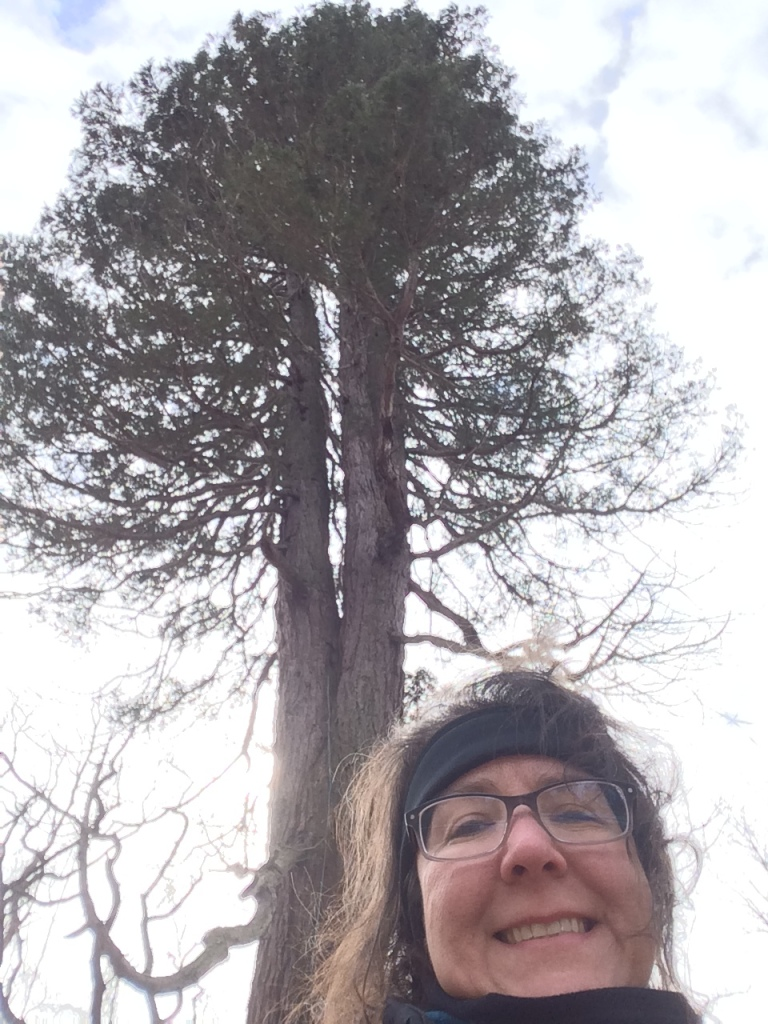 Showing my love for this State Champion Giant Sequoia with a selfie!